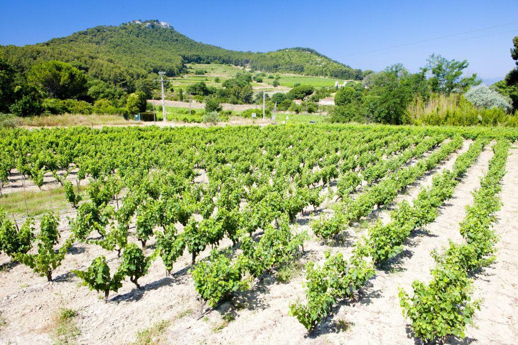 Vineyards in Bandol, Provence, France