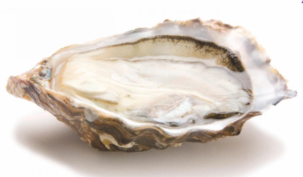 Gillardeau Oyster